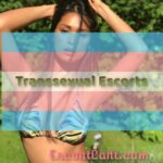 The Types of Elite Transsexual Escorts